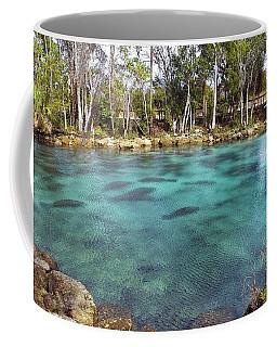 Manatees Sleeping In Morning Glory Spring Coffee Mug