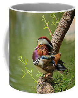 Mandarin Duck On Tree Coffee Mug