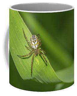 Mangora Acalypha Coffee Mug