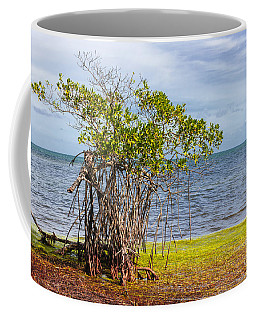 Mangrove At Florida Keys Coffee Mug