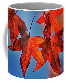 Maple Leaves In The Fall Coffee Mug