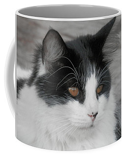 Coffee Mug featuring the photograph Marley Cat Meowning by Belinda Lee