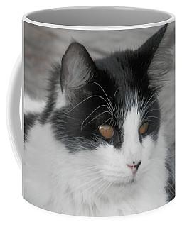 Marley Cat Meowning Coffee Mug by Belinda Lee