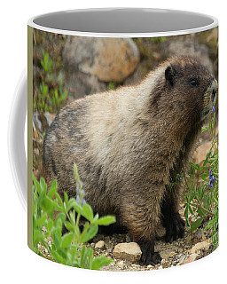 Coffee Mug featuring the photograph Marmot Lunch by Mike Dawson