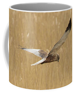 Marsh Harrier Quartering Coffee Mug