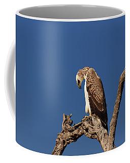 Martial Eagle Coffee Mug
