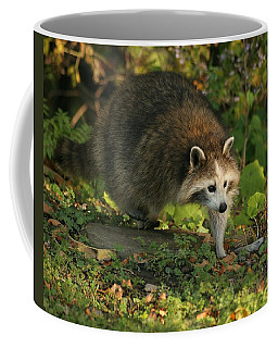 Coffee Mug featuring the photograph Maskless Raccoon by Doris Potter