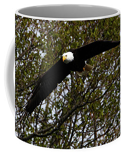 Mature Bald Eagle Coffee Mug