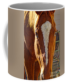 Mccool, Grandson Of Secretariat Coffee Mug