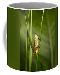 Coffee Mug featuring the photograph Meadow Grasshopper by Jouko Lehto