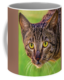 Meow Means Woof In Cat Coffee Mug
