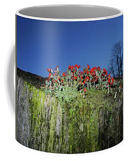 Coffee Mug featuring the photograph Merry Christmoss by Raymond Salani III