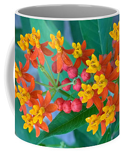 Mexican Butterfly Weed 1 Coffee Mug