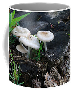 Coffee Mug featuring the photograph Mid Summers Fungi by Rick Morgan