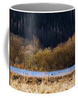 Migrating Swans Resting In Spring 2017 Coffee Mug