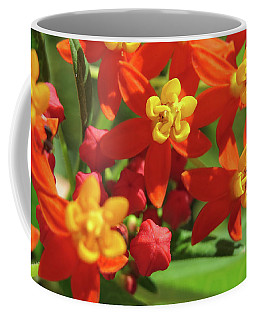 Coffee Mug featuring the photograph Milkweed Flowers by Melinda Saminski