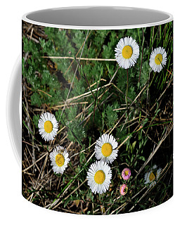 Coffee Mug featuring the photograph Mini Daisies by Ron Cline