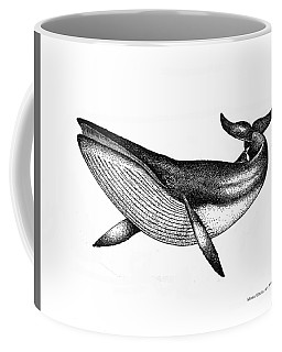 Coffee Mug featuring the drawing Minke Whale - Vintage Drawing by Art MacKay