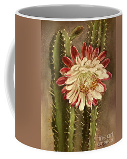 Miracle Of The Cactus Bloom Coffee Mug by Randy Burns