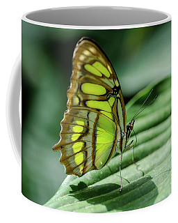 Coffee Mug featuring the photograph Miss Green by Nick Boren