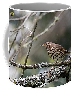 Mistle Thrush Coffee Mug