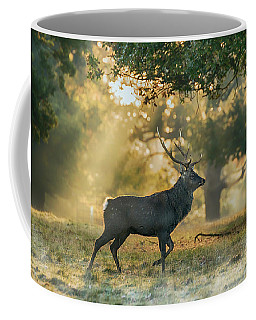 Coffee Mug featuring the photograph Misty Walk by Scott Carruthers