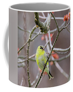 Coffee Mug featuring the photograph Molting Gold Finch Square by Bill Wakeley