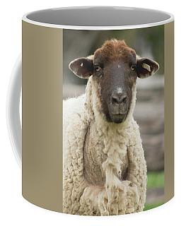 Moma Sheep Coffee Mug