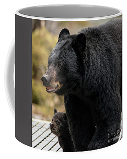 Mommy And Baby Black Bear Coffee Mug