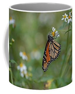 Monarch Butterfly - Hanging On Coffee Mug