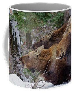 Moose Family Lunch Coffee Mug