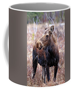 Moose In The Brush Coffee Mug by Scott Mahon