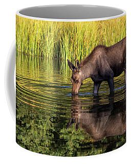Coffee Mug featuring the photograph Moose Reflections by Mary Hone