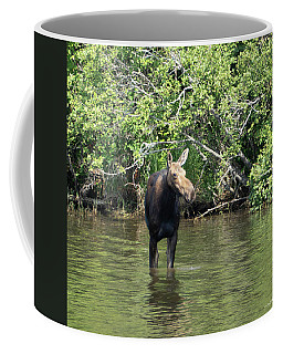 Coffee Mug featuring the photograph Moose Wading by Sally Sperry