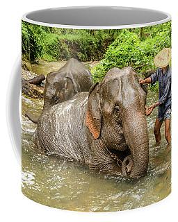 Morning Ablutions 4 Coffee Mug by Werner Padarin