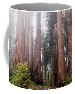 Coffee Mug featuring the photograph Morning Light In The Forest by Peggy Hughes