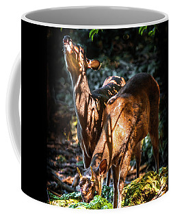 Coffee Mug featuring the photograph Morning Light Of Dawn by Karen Wiles