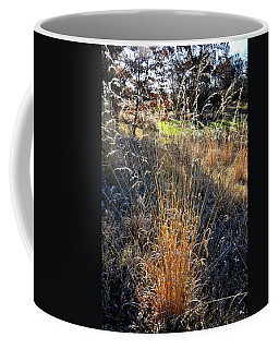 Morning Sun Backlights Fall Grasses In Glacial Park Coffee Mug