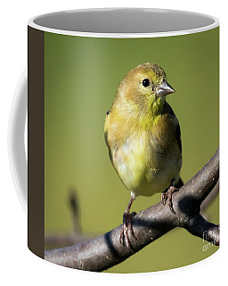 Morning Visitor  Coffee Mug