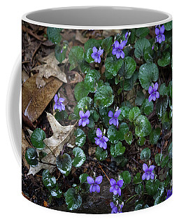 Morning Wild Violets Coffee Mug