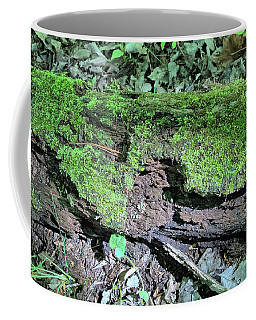 Coffee Mug featuring the photograph Moss On A Log 2 by Richard Goldman