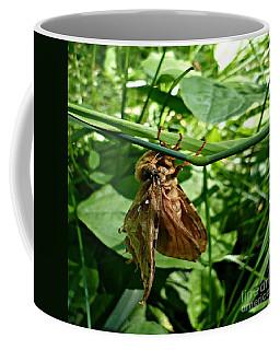 Moth At Rest Coffee Mug