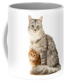 Mother Cat And Ginger Kitten Coffee Mug