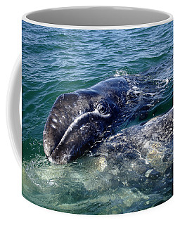 Mother Grey Whale And Baby Calf Coffee Mug