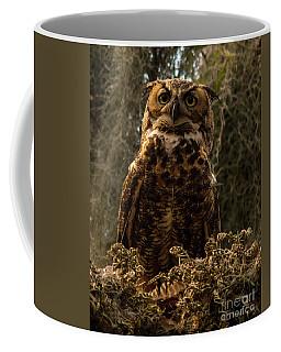 Mother Owl Posing Coffee Mug