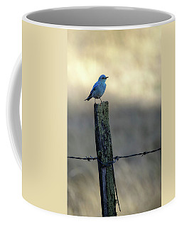 Mountain Bluebird On Wood Fence Post Coffee Mug