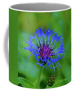 Mountain Cornflower Coffee Mug by Byron Varvarigos