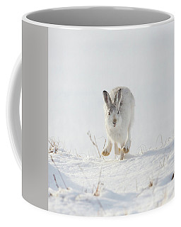 Mountain Hare Approaching Coffee Mug