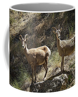 Mountain Sheep Coffee Mug