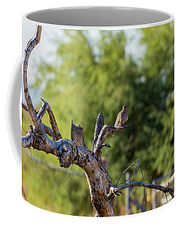 Mourning Dove In Old Tree Coffee Mug